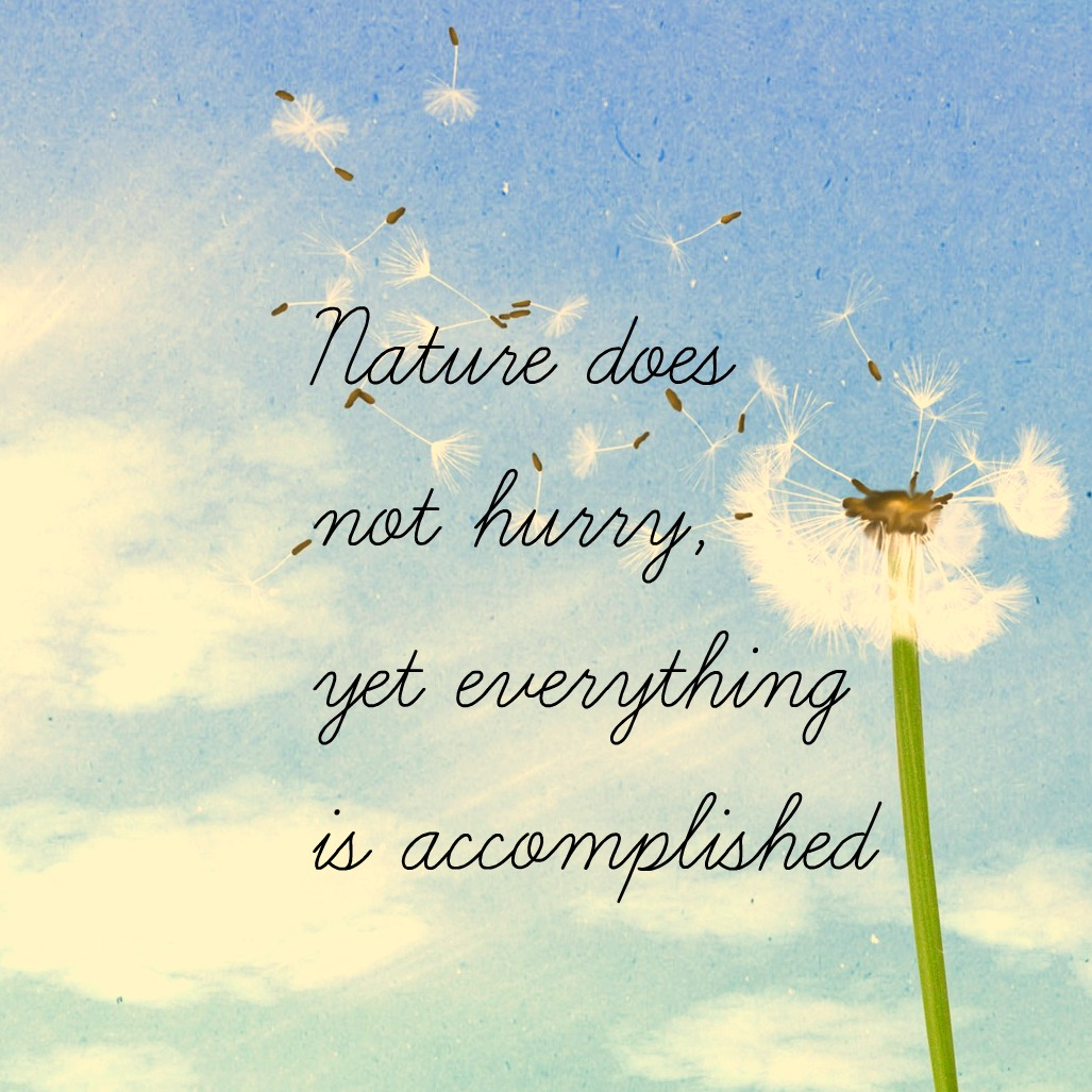 #zen #quote Nature does not hurry yet everything is accomplished Lao Tzu Quote be kitschig blog