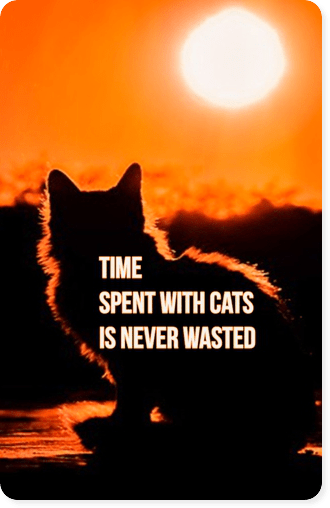 Zitat Time spend wit cats is never wasted be kitschig blog