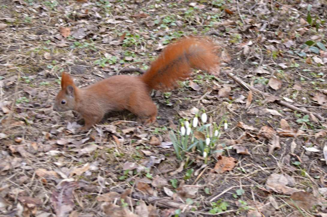 #spring #squirrel be kitschig blog berlin
