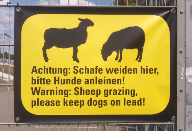 Sheep Grazing Friedrich Ludwig Jahn Sportpark