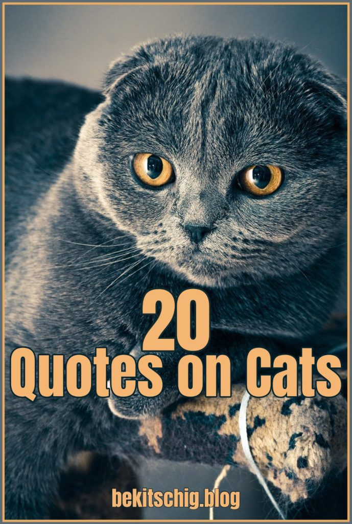 20 Quotes about Cats Katzen Zitate Be Kitschig Blog Berlin