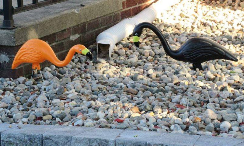 Fall greetings Halloween Flamingoes bekitschig blog