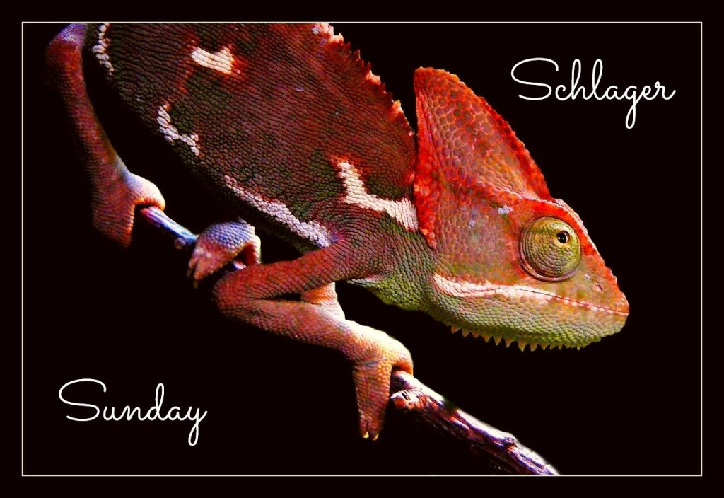 Schlager Sunday Karma Chameleon Culture Club