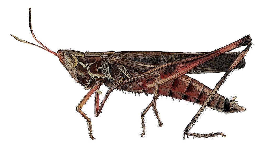 Crickets 20 Things I learned in writing class bekitschig blog