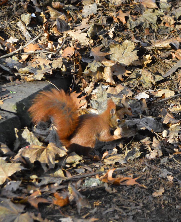 Fotos Eichhörnchen Berlin Humboldthain - Gleimviertel  bekitschig.blog