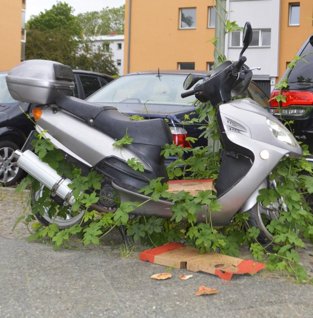 odd objects - bekitschig.blog Berlin - Roller überwachsen - scooter