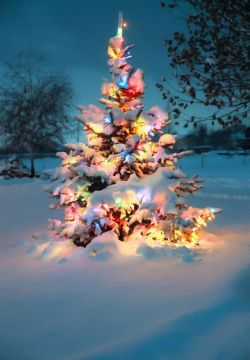 Snow covered Christmas tree with colorful lights