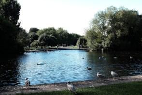 soang berenang (2)