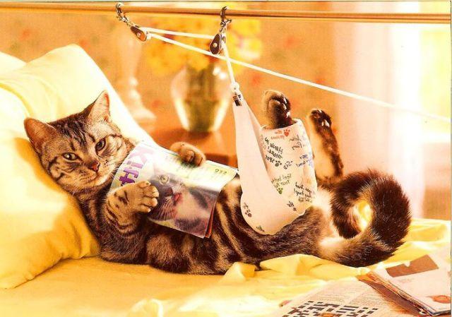 Вывих у кошки симптомы