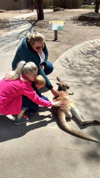 Petting kangaroos.