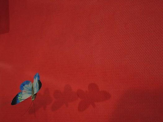 papillon_vole1.jpg