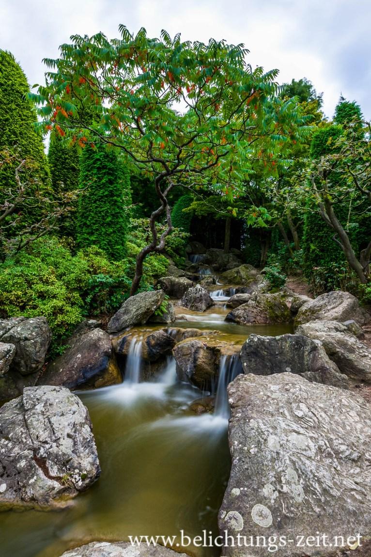 Japanischer Garten, Bonn