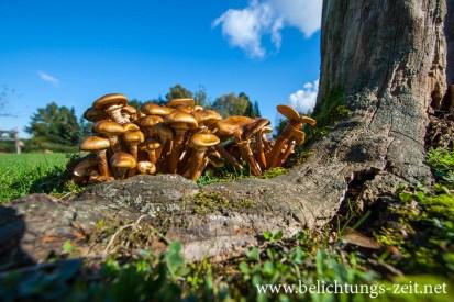Pilze auf einem Baum
