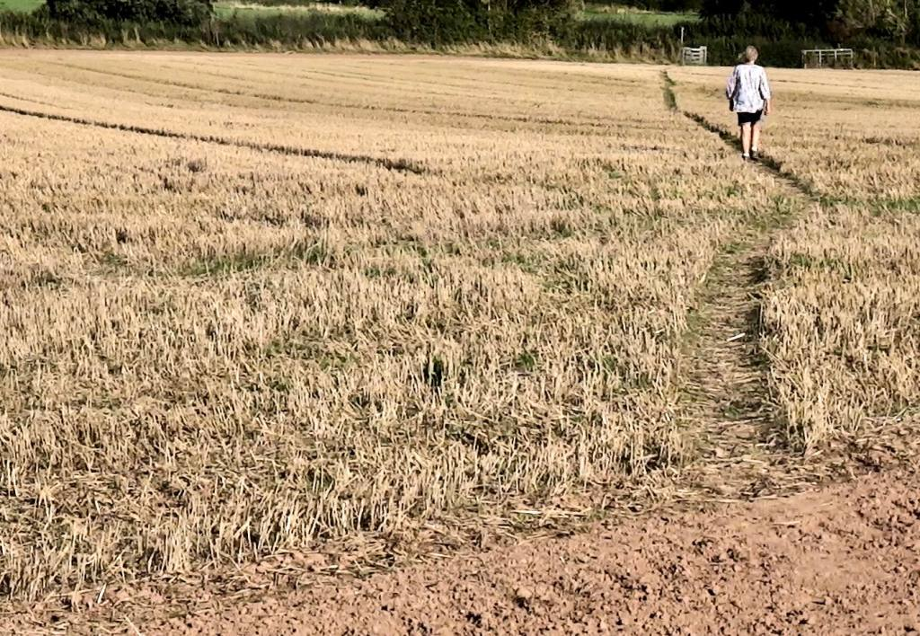 Person walking on path across stubble field