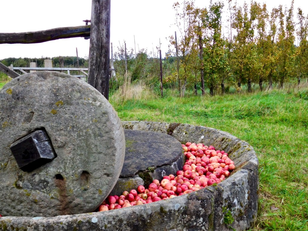 Cider mill with red apples in the trough