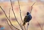 szabad, mint a madár