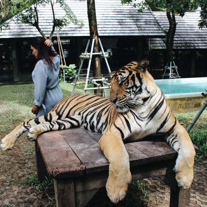 Tiger Kingdom, Phuket Thailand