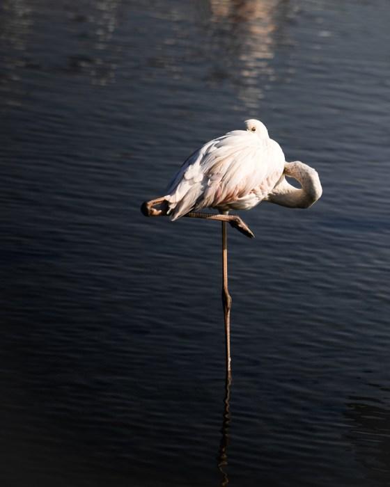 moody flamingo