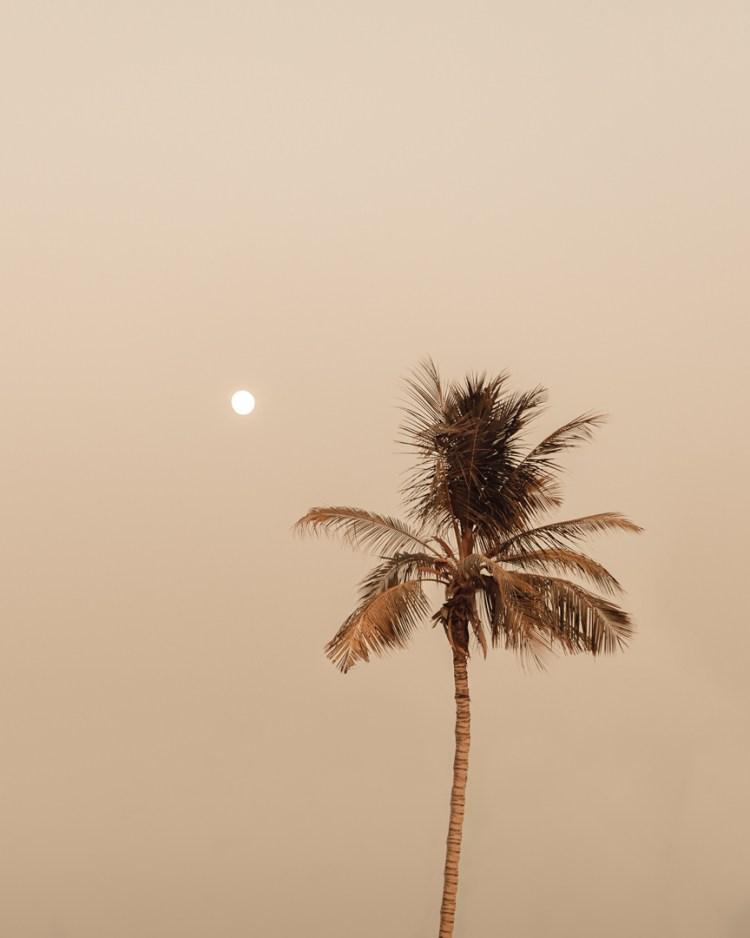 Neutral palm tree moon