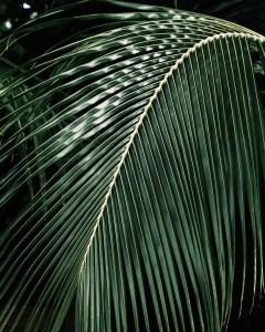 lush palm tree frond green island foliage