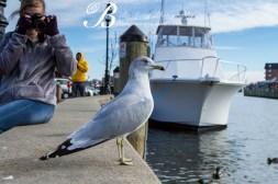 A budding bird photographer