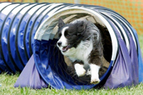 Dog running though tunnel