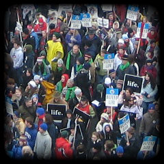 march for life crowd shot
