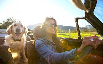Onze consells per viatjar amb el gos