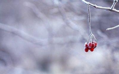 El desembre arriba amb fred rigorós