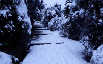 La nevada de març emblanquina Collserola