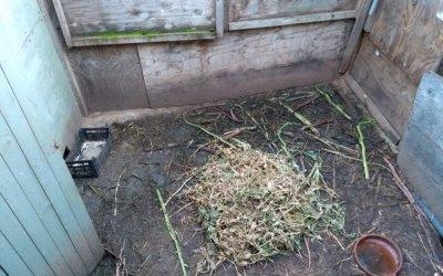 Troben animals domèstics en molt mal estat als horts de la C-58
