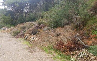 Restes de jardineria inflamable als terrenys de l'EMD