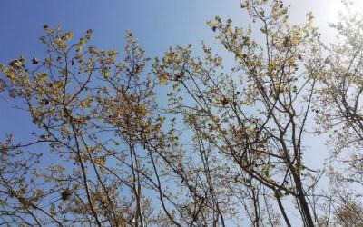 Es mantindrà l'estabilitat i el sol marcarà l'inici de setmana a Bellaterra