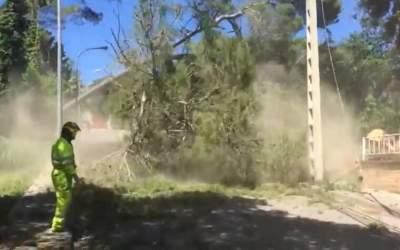 Es retiren una cinquantena d'arbres caiguts pels temporals a Bellaterra