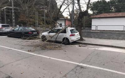El vent genera caiguda de branques a Bellaterra