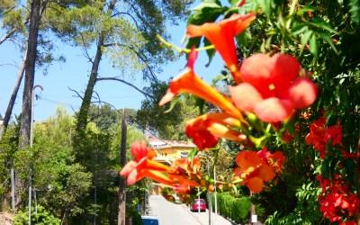 """Bellaterra, un lloc """"privilegiat"""" pel confinament"""