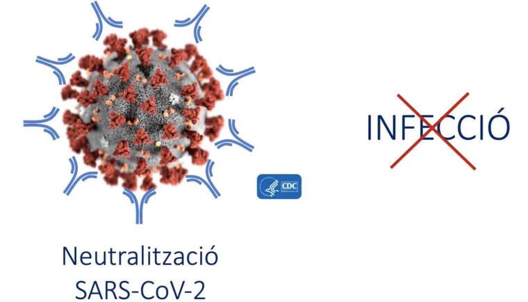 La UAB treballa en una vacuna contra el coronavirus | CEDIDA