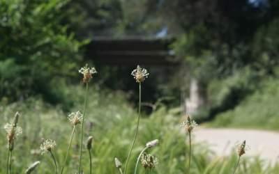 Es constitueix SOS Vallès, amb 30 entitats ecologistes per la sostenibilitat a la comarca