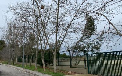FOTODENÚNCIA | Rusc de vespa asiàtica al carrer Salcillo