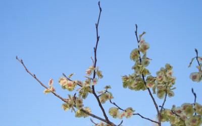 [FOTOS] Així ha arribat la primavera a Bellaterra