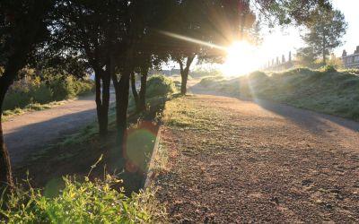 Llum verda a un nou contracte de jardineria i al mapa de contaminació acústica de Cerdanyola