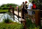 pasando por las pasarelas que recorren el corazon del parque natural