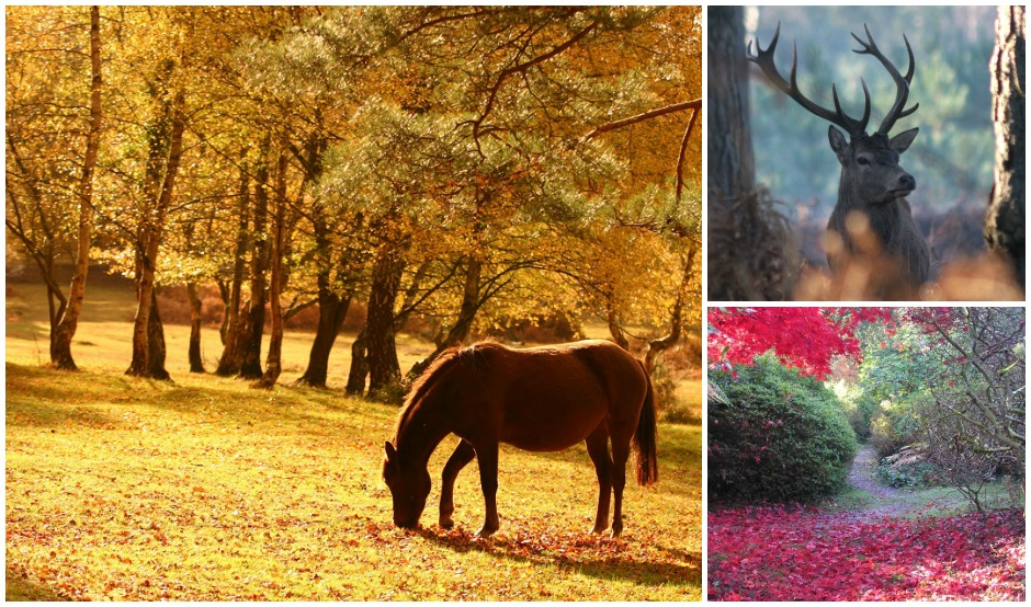 new forest collage