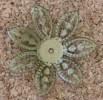 Excellent centre de fleur, diamètre de 25mm environ, 3-4mm de hauteur, peut facilement ête aplati