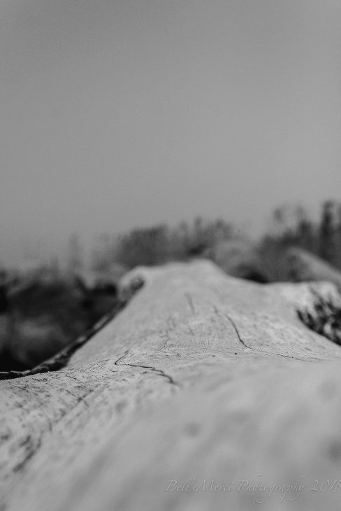 Driftwood 1...
