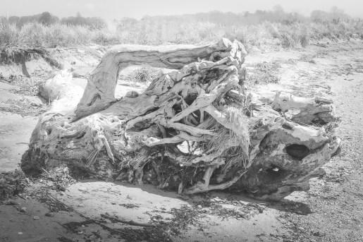 Driftwood 3...