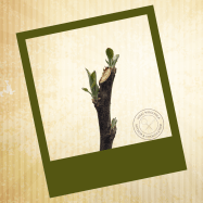 Cream color striped background. Green Polaroid picture frame. Leaves sprouting on a tree branch