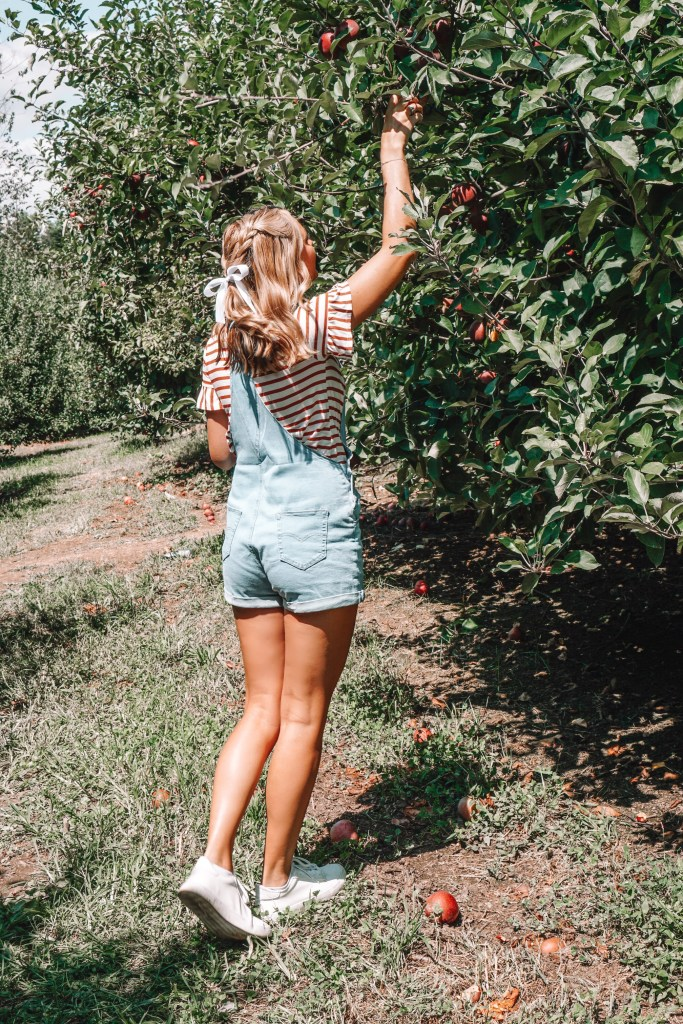 Where we went apple picking this fall, where to find the best apple cider doughnuts, my favorite stores in town, and the best sunflower field- everything you need to know about visiting Ellijay, the apple capital of Georgia!