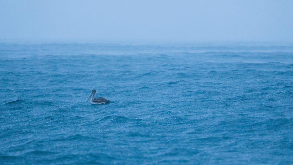Blue expanse of sea with lone duck