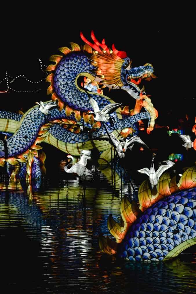 dragon festival during nighttime